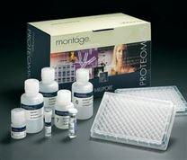 维生素D2植物Elisa试剂盒