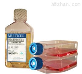 大鼠肺成纤维样细胞特价;RL1