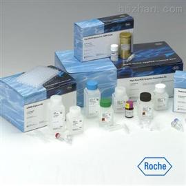 兔双氢睾酮(DHT)ELISA试剂盒