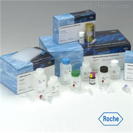 豚鼠白介素4(IL-4)ELISA试剂盒