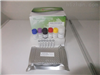 鱼磷酸化腺苷酸活化蛋白激酶(AMPK)ELISA分析试剂盒